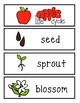 Apple life Cycle Word Wall Cards