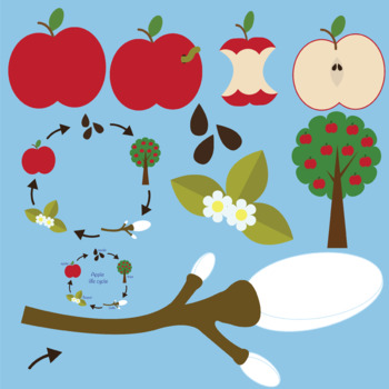 Apple life cycle clip art science