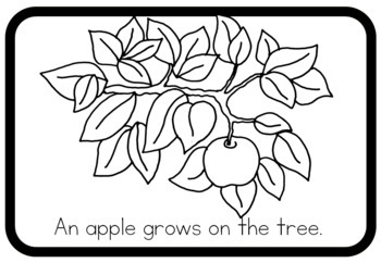 Apple tree life cycle book (simplified version)