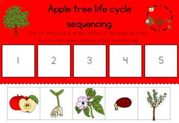 Apple tree life cycle bundle