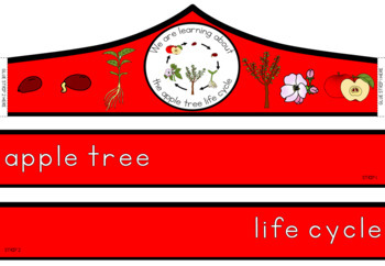 Apple tree life cycle crown