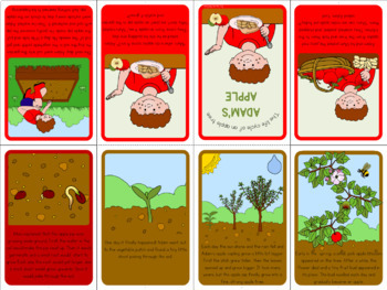Apple tree life cycle mini book