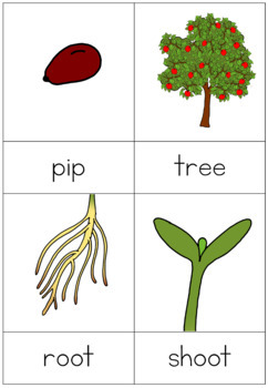 Apple tree life cycle nomenclature cards