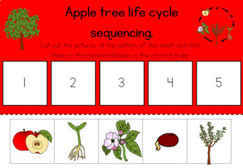 Apple tree life cycle sequencing activity worksheet