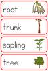 Apple tree life cycle word wall