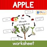 Apple tree life cycle  worksheet