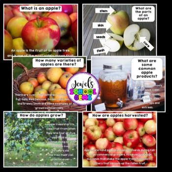 Apples Science Activities (Apples PowerPoint)