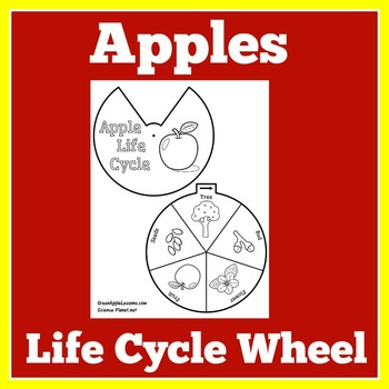 Apple Life Cycle Printable | Apple Life Cycle Craft | Apple Life Cycle Activity
