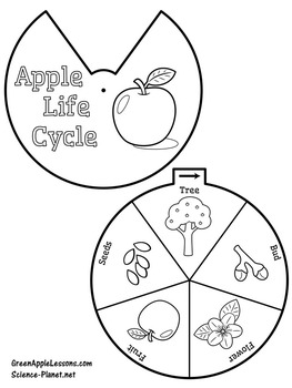 graphic regarding Apple Life Cycle Printable called Apple Lifestyle Cycle Craft Recreation