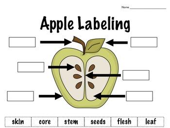 Apples, Apples, All Around: A Cross-Curricular Apple Themed Unit
