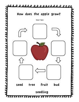Apples Apples everywhere