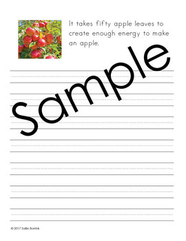 Apples - Print and Cursive - Copywork - Handwriting