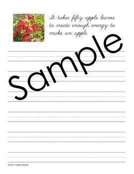 Apples - Cursive - Copywork - Handwriting