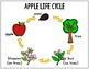 Apples: Differentiated Science and Literacy Activities