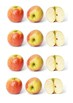 Apples Handout