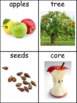 Apples Informational Text and Writing Activity