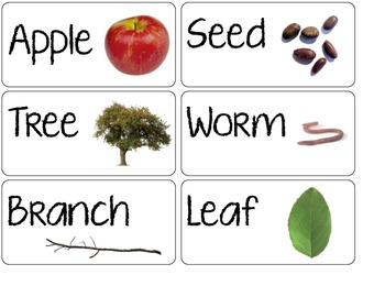 Apples Lesson Plan