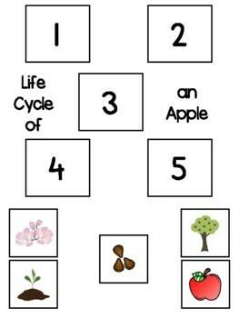 Apples Mini Unit