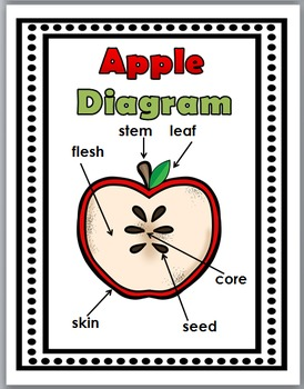 Apple Life Cycle Science & Literacy - Apple Unit - Apple Science, Apple Literacy