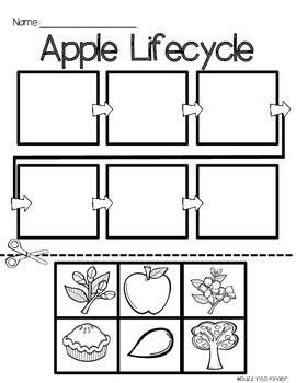 Apples : Science for Kinder