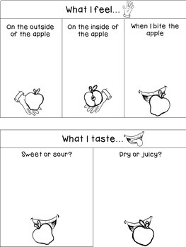 Apples Sensory Booklet