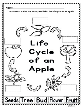 Apples and Our Five Senses