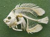 Aquaculture Webquest