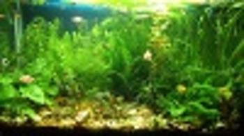 Aquatic Ecosystem Model Set up - AP level pt 1