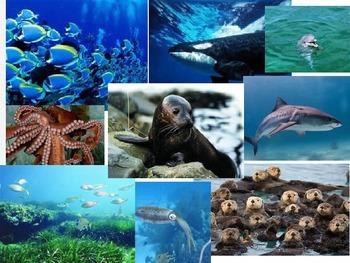 Aquatic Ecosystems/biomes