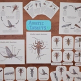 Aquatic Insects Pack: ecology fun for indoors and outdoors