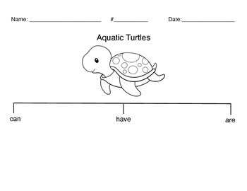 Aquatic Turtle Organizer