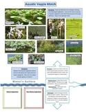 Aquatic Vegetations:  Submerged, Floating, Emergent
