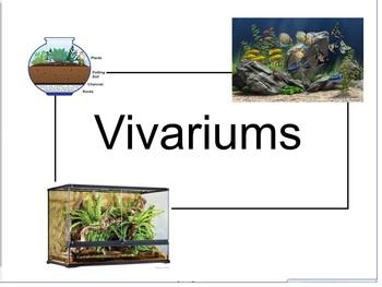 Aquatic and Terrestrial Ecosystems Taught Through Vivariums