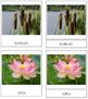 Aquatic and Wetland Plants: 3-Part Cards