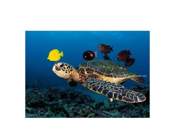 Aquatic animals PPT