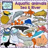 Aquatic animals (Ocean, Sea and river underwater life) clipart {Science}