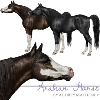 Arabian Horse {Graphics for Commercial Use}