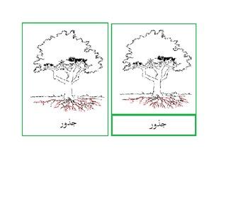 Arabic: Tree ( Shajar) 3-Part Cards :