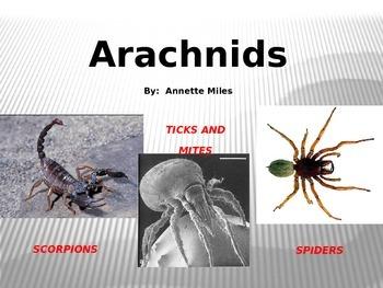 Arachnids Powerpoint