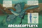 Archaeopteryx - Dinosaur Poster & Handout