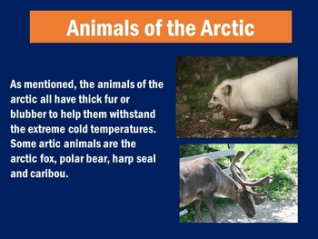 Arctic Animals PowerPoint