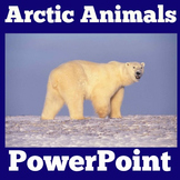 Arctic Animals   Kindergarten 1st 2nd 3rd 4th 5th Grade  