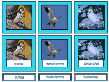 Arctic Animal 3-Part Cards with 18 different Arctic Animals