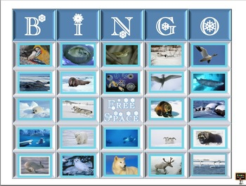 Arctic Animal Bingo Cards with Picture Word Cards - 25 cards in all