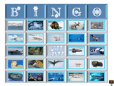 Arctic Animal Bingo Cards with Picture Word Cards - 25 car