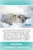 Arctic Animal Fact Cards