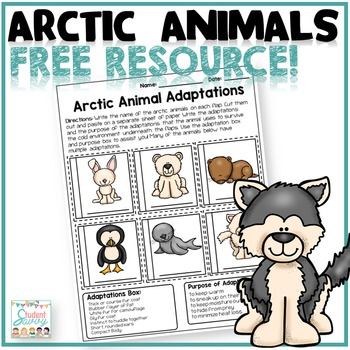 Arctic Animal - Free Resource!