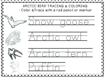 Arctic Animal Trace & Color Freebie with 12 Arctic Animals to Color & Trace