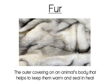 Arctic Animal Unit Vocabulary