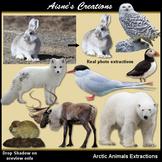 Realistic Arctic Animals Clip Art